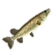 HWDE Hylian Pike Food Icon.png