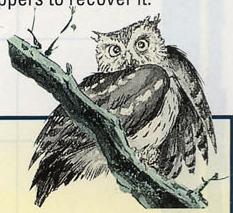 LA Owl Artwork 6.png