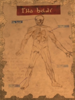 TP Doctor Poster Body.png