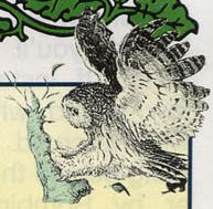 LA Owl Artwork 5.png