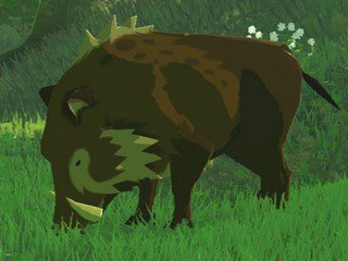 BotW Woodland Boar Model.png