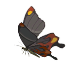 BotW Smotherwing Butterfly Icon.png