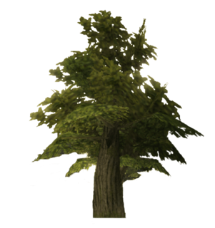 TP Tree Model.png