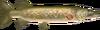 TP Hylian Pike Model.png