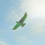 BotW Hyrule Compendium Islander Hawk.png