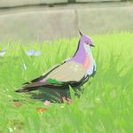 BotW Hyrule Compendium Wood Pigeon.png