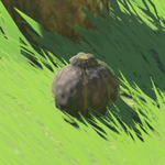 BotW Hyrule Compendium Hearty Truffle.png