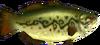 TP Hyrule Bass Model.png