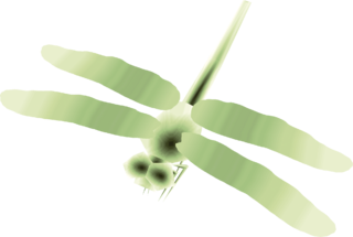 TP Male Dragonfly Render.png