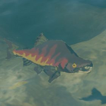 BotW Hyrule Compendium Hearty Salmon.png