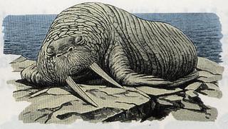 LA Walrus Artwork.png