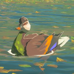 BotW Hyrule Compendium Bright-Chested Duck.png