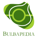 Bulbapedia.png