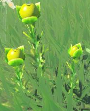 BotW Hyrule Herb Model.png