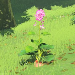 BotW Hyrule Compendium Hearty Radish.png