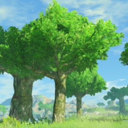 Guidelines:Hyrule Warriors: Age of Calamity