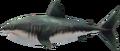 MM3D Savage Shark Model.png