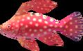 MM3D Fairy Fish Model.png