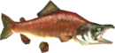 TP Reekfish Model.png