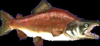 TP Reekfish Model.png