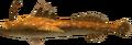 MM3D Bashful Angler Model.png