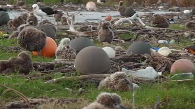 MIDWAY...L'île aux oiseaux !