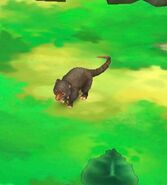 Cuscus (Black)