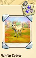 White zebra.JPG
