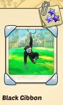 Black Gibbon.jpg