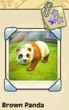 Brown panda.JPG