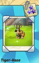 Tiger rabbit.JPG