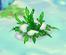 Icebush.PNG