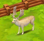 Fallow Deer (White)