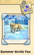 Summer Arctic Fox.jpg