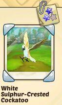 White Cockatoo VC.jpg