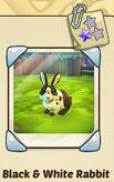 BnW rabbit.JPG