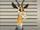 Leonard (antelope)