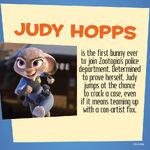 Judy info