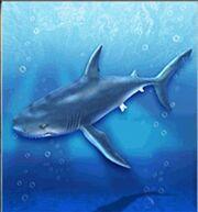 Shortfin Mako Shark.jpg