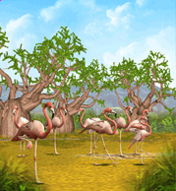 Greater Flamingo.png