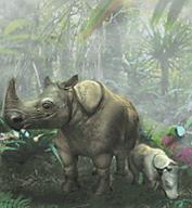 Javan Rhinocerous.png