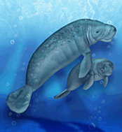 West Indian Manatee.png