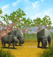 Black Rhinocerous.png