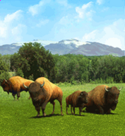 American Bison-0.png
