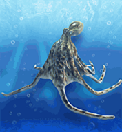 Pacific Octopus.png