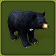 Asiatic Black Bear.jpg
