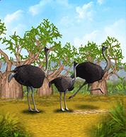 Ostrich-0.png