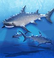 Tiger Shark.png