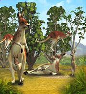 Red Kangaroo.png