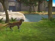 Bengal tiger (Pre-Release ZT2)